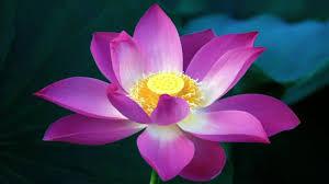 Giáo Lý Chính Của Đạo Phật